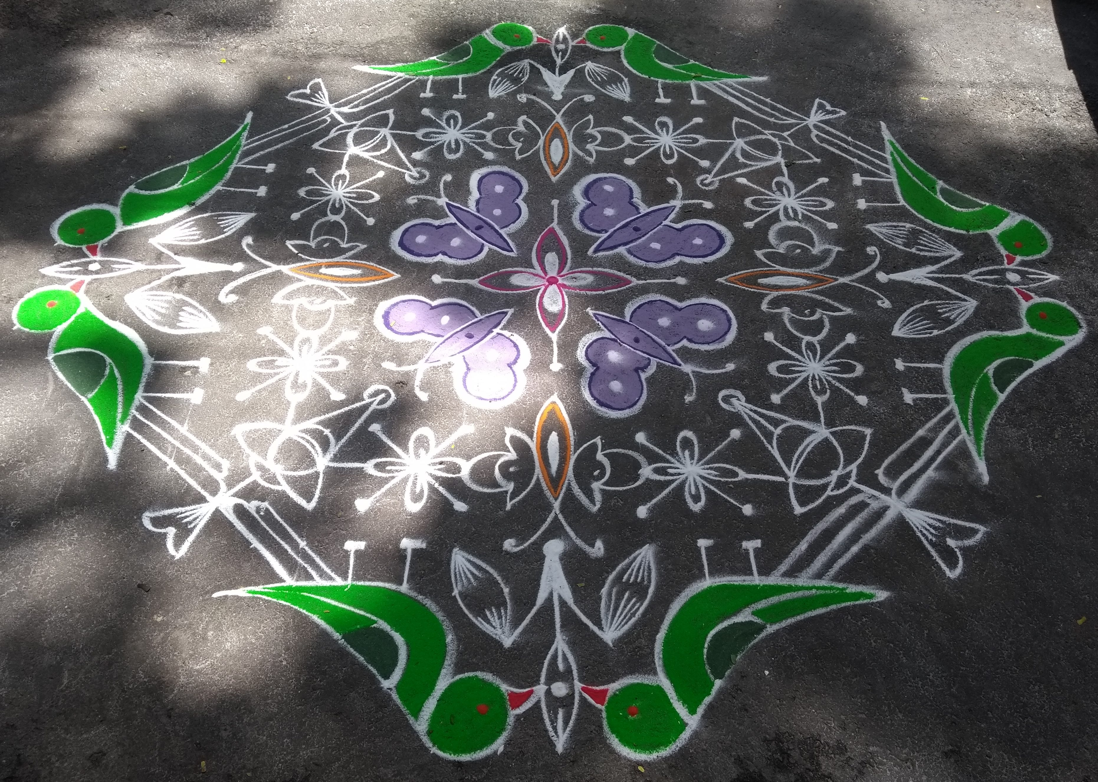 Parrots and butterflies || 25 dots kolam for contest